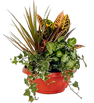 Green Dishgarden Plant Arrangement