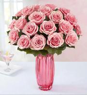Pink pink roses