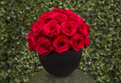 Red Rose Ball Preserved Roses