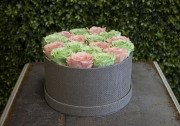Pink & Light Green Round Box Preserved Roses