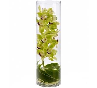 Zensational Cymbidium Orchids
