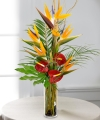 Beautiful Silk Exotic Designer's Choice Arrangement