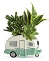 The Cool Camper Succulent Garden