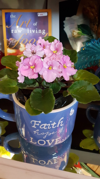 Beautiful flowering plant in mug