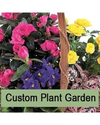 Garden of Plants