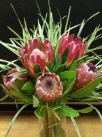Pink Mink Proteas
