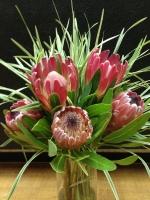 Pink Mink Proteas