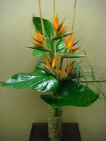 Tropical Vase Arrangement
