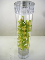 Cylinder Orchids