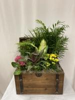 Trunk-O-Plants