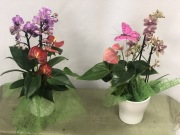 Phalaenopsis Orchids and Anthurium