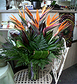 Exotica Arrangement by Vivian