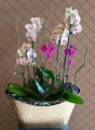 Exotic Orchid Planter
