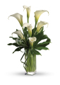 Elegant Large Calla Lilies Arrangement in Vase