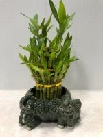 Lucky Bamboo Standing Elephants Planter
