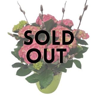 Phalaenopsis & Succulent Garden
