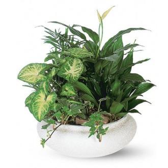 Ceramic Green Dish Garden