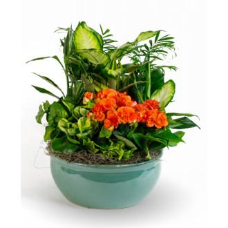 Ceramic Flowering Dish Garden