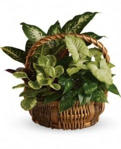 Mother\'s Day Florist Designed Planter Basket