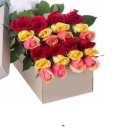Two Dozen Mixed Color Roses