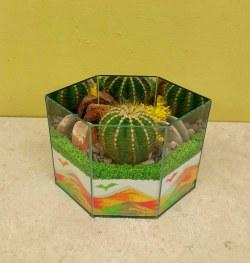 Cactus Garden 1B
