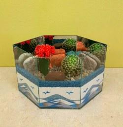 Cactus Garden 4A