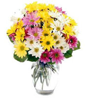 Mixed Coloured Daisies arranged in a Vase