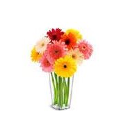 Bouquet of Gerbera Daisies in vase