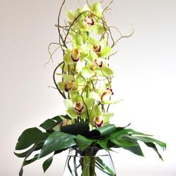 CARISMA FLORISTS®Cymbidium Orchid Arrangement CF-04