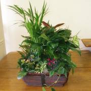 CARISMA FLORISTS® Florist Designed Blooming & Green Plants CF-18