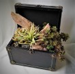 ARTIFICIAL ARRANGEMENT OF SUCCULENT PLANTS IN A BOX