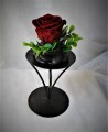 ETERNAL RED ROSE ON BLACK STAND