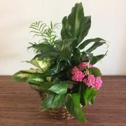 Custom-Designed Mixed Planter