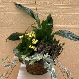 \'Simply Fresh\' Mixed Planter