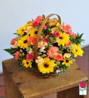 Beretania's Jane Basket
