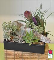 Large Succulent Garden [succulent varieties seasonal]