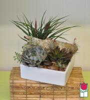 Succulent Garden Low Square [succulent varieties seasonal]