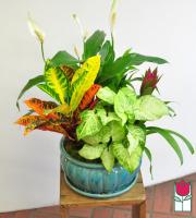 Beretania's Large Blooming Planter