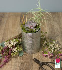 Beretania's Mini Succulent Garden [succulent variety varies]