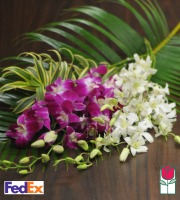12 Dendrobium Orchid Spray Mix - [ship to mainland]