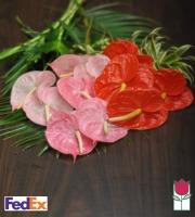 Hawaiian Heart - Cut Flowers - [ship to mainland]