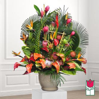 Beretania\'s Rainforest Tropical Arrangement