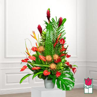 beretania florist atherton tropical arrangement