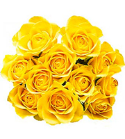 12 Yellow Roses without Fillers