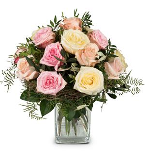 Cordial Rose Greeting