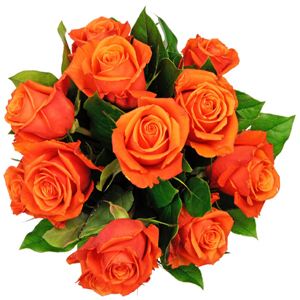 Affection - 12 Orange Roses
