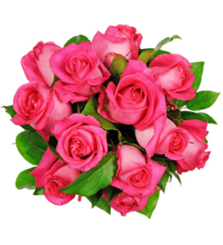 Affection - 12 Pink Roses
