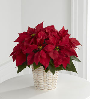 Le panier Poinsettia rouge de FTD® (petit)