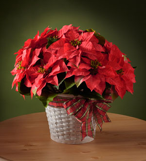 The FTD® Happiest Holidays™ Poinsettia