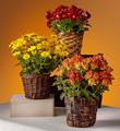 The FTD® Bright Harvest Basket